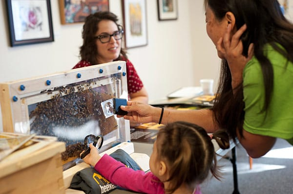 Bees make a home in the frame as beekeeper Roberta Kato shares discovery with mesmerized child.