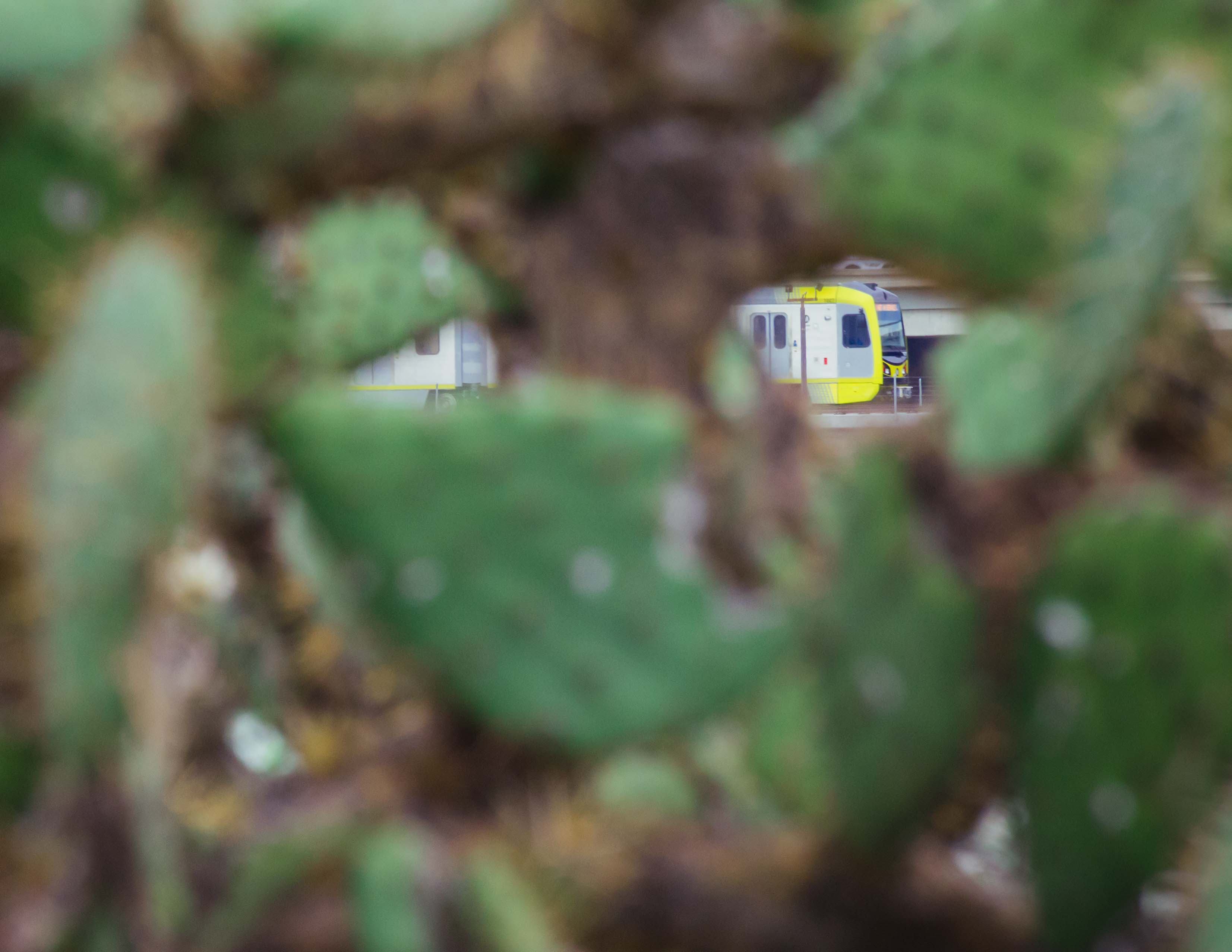 A test train on the Gold Line extension to Azusa as seen through a cactus growing along the San Gabriel River. Photo by Steve Hymon/Metro.